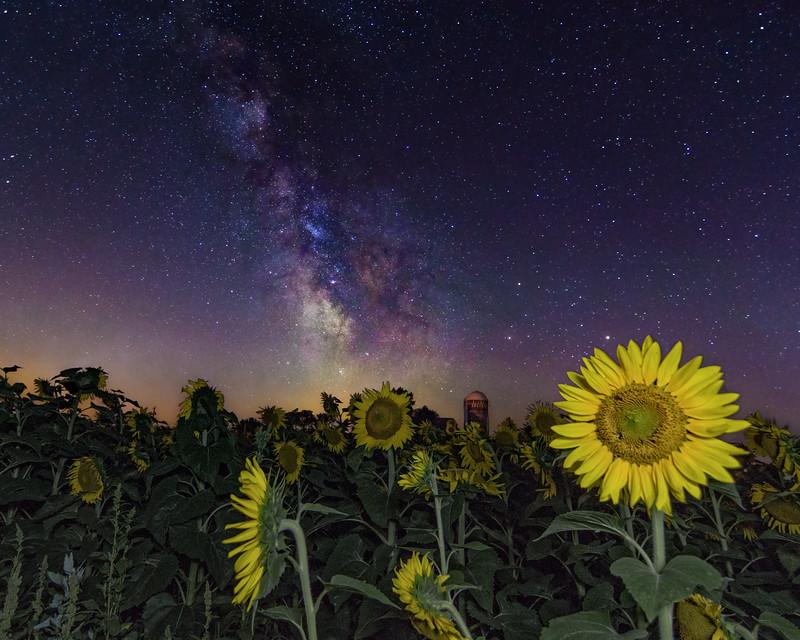 Milky Way over Sunflowers