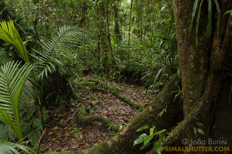 Atlantic forest trail