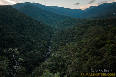 Atlantic forest valley