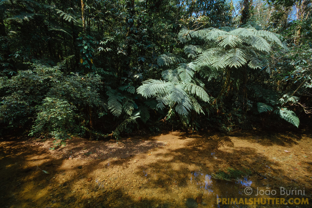 Ferns by a shallow river