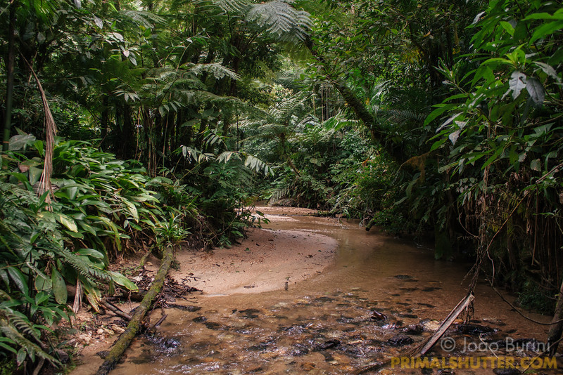 Sand banks on a forest stream