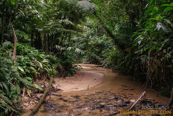 Atlantic forest stricto sensu (rainforest)