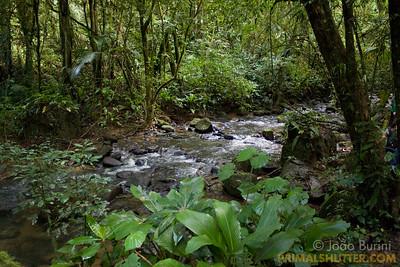 Atlantic forest river