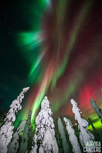 Arctic Audience