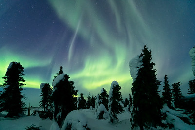 Aurora Borealis over the Enchanted Forest
