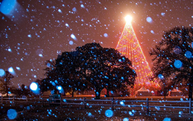 Snow in Austin at the Zilker Tree