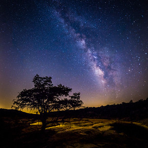 Nature's Silhouette - Milky Way and Tree at Pedernales Falls
