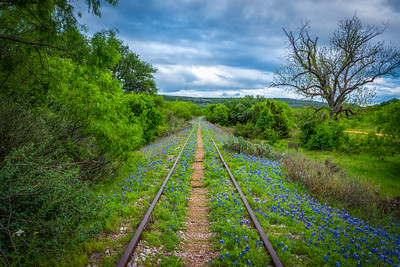 Bluebonnets and Tracks
