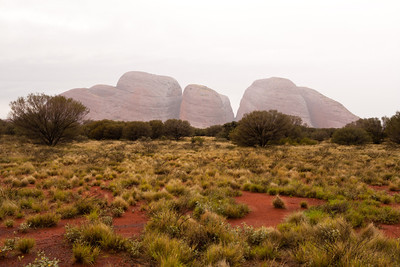 Kata Tjuta from a close viewing area
