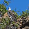 Aigle dans Yardie creek