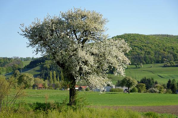 Gruber Höhe, Dornbach