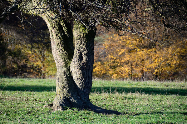 Hutweide Grub