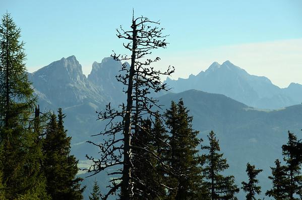 Dead Spruce (Reichenstein and Hochtor in background)