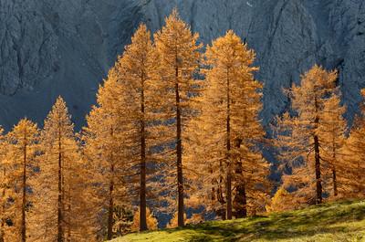 Maltschacher Alm, Bärental