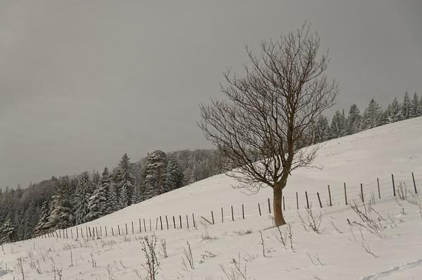 Weissenbachalm, Hochstaff, Lower Austria's Voralpen