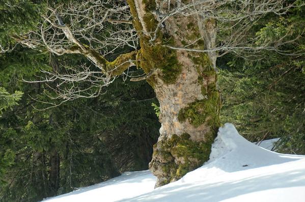 Wildalpe, skitour