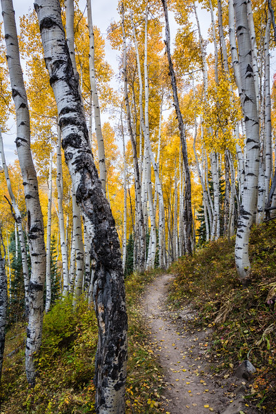 Into the Aspens