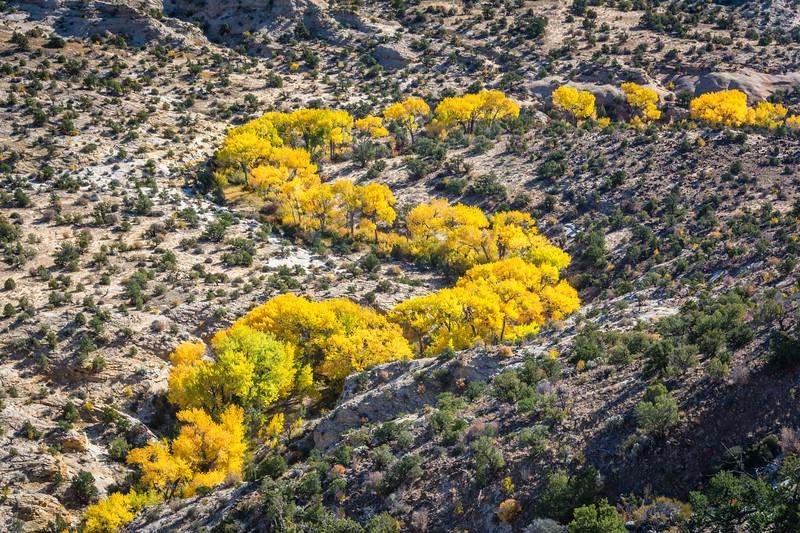 Desert Creek Autumn