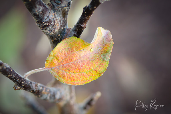Just being a leaf, hanging out waiting for winter to arrive.