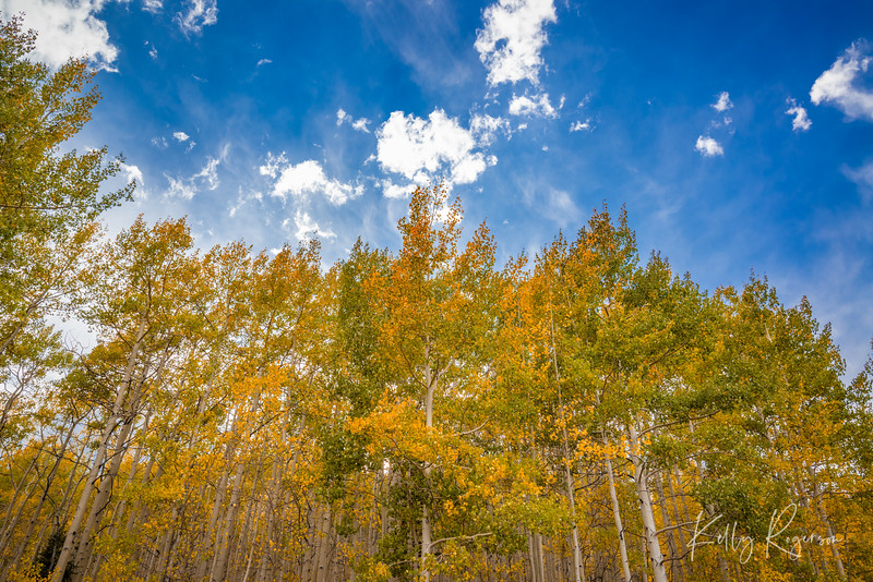 When out for a fall adventure, don't forget to look up. If you don't, you might just miss this view. Taken on the back (east side) of Guardsman Pass over into Big Cottonwood Canyon, Utah.
