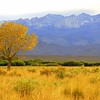 Cottonwood & the High Sierra