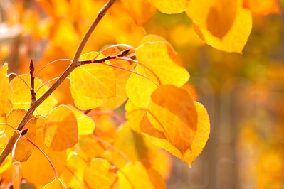 Autumn Leaves In Autumn 008 | Wall Art Resource