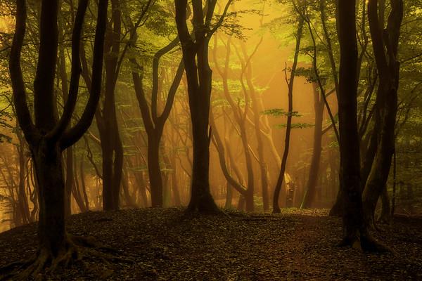 Caldo della Foresta