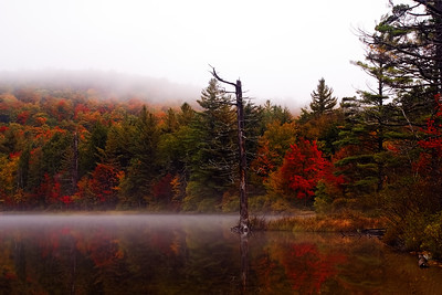 Autumn Trees at Moss Lake