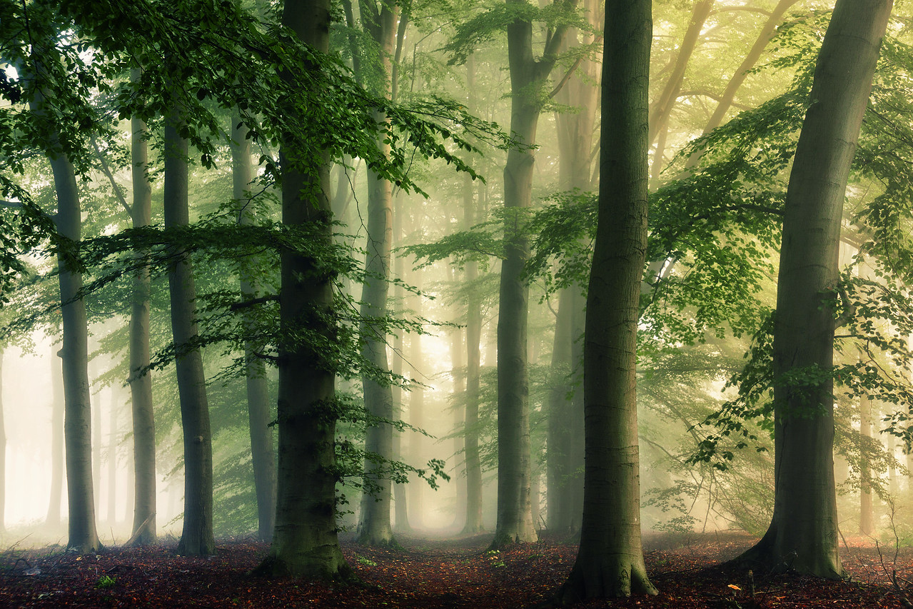 Some trees and some mist...