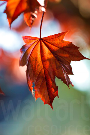 Colorado Fall Foliage 002 | Wall Art Resource