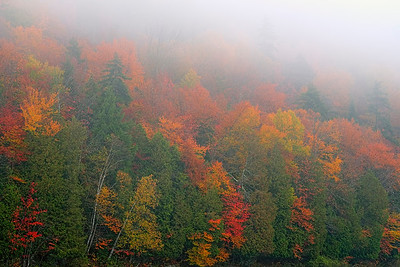 Misty Autumn Colors