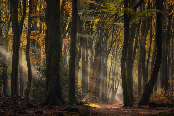 Magic of the Dutch forest