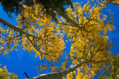 Colorado Fall Foliage 025 | Wall Art Resource