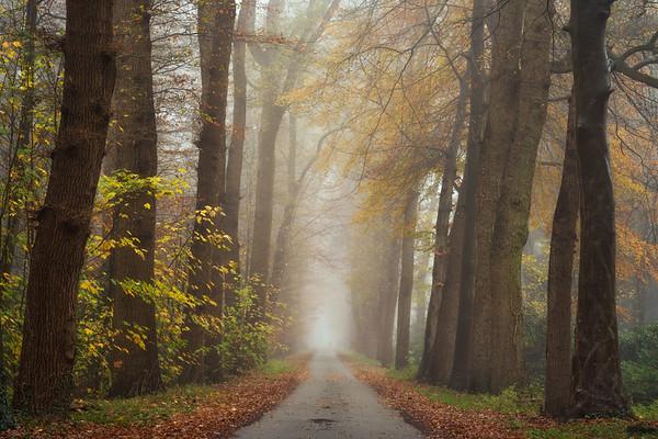 Autumnal moodiness