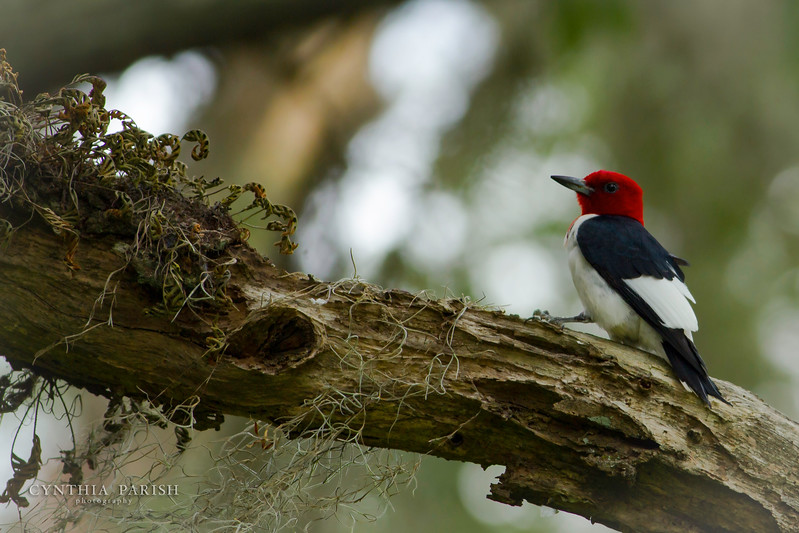 Woodpecker, Chambers County, Lagow Ranch homesite
