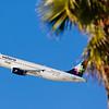 Palm trees / LAX airport, USA