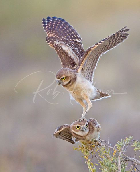 """Not the most stable perch, but it'll do!  This photo won the """"Highly Honored"""" category for Nature's Best Magazine 2011."""
