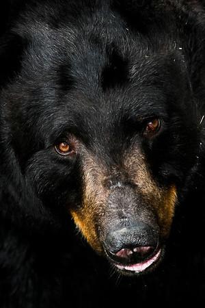 North Carolina Wildlife Magazine 1st place mammals 2010, Published in North Carolina Wildlife Magazine January 2011