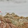 BLOY - Bird Rock - Pebble Beach - 08-21-2021