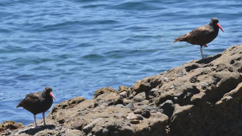 BLOYs - Weston Beach - 06-11-2021