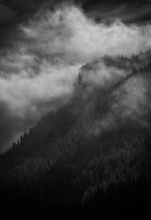 Morning Fog |Icy Strait Point, AK