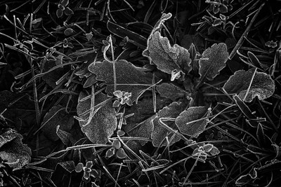 Autumn Artifact [4]