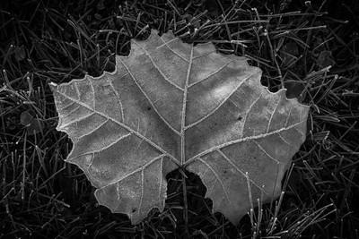Autumn Artifact [3]