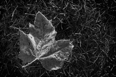 Autumn Artifact [2]