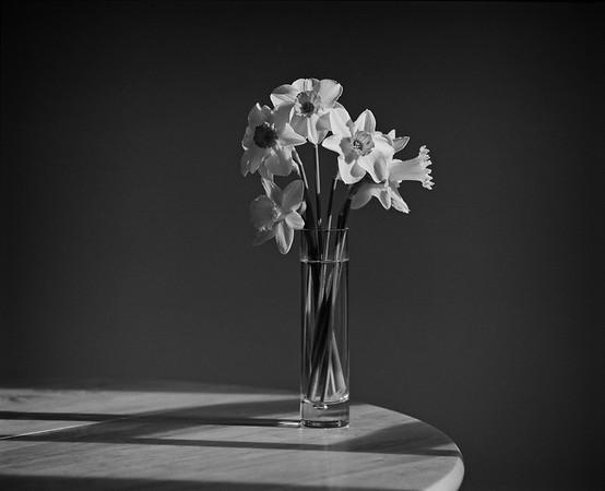 Daffodils [Vase]