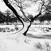 Snow coverd tree Bradgate park