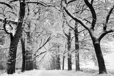 Black & Winter