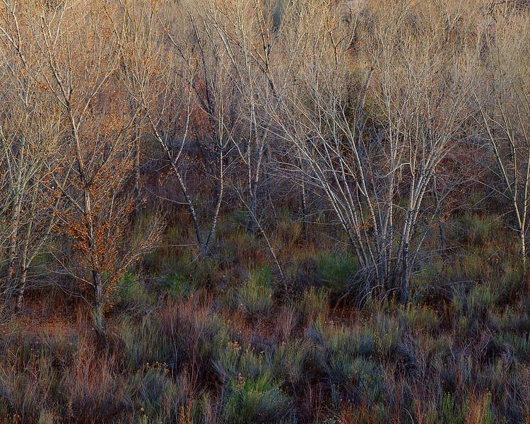 North Blue Flats, Twilight Study
