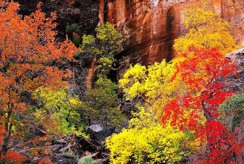 Autumn Forest below the Rim
