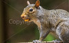 Backyard animals - May 2014-0022 - 72 ppi